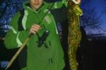 Aalrutten, 57 cm, Fischfetzen